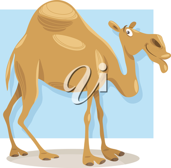 Cartoon Illustration of Funny Dromedary Camel Animal