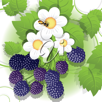 Royalty Free Clipart Image of a Bee on Blackberries