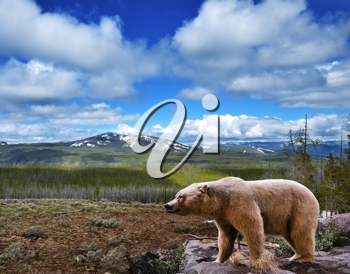 Royalty Free Photo of a Mountain Landscape With a Bear