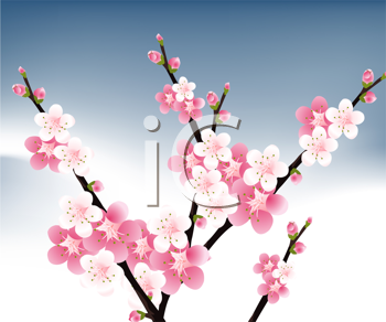 Royalty Free Clipart Image of Pink Blossoms