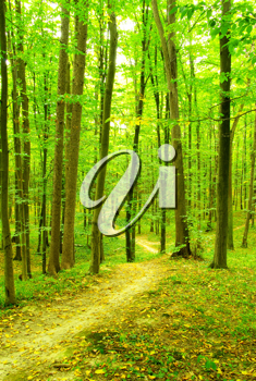 Royalty Free Photo of a Path in a Forest