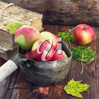 Autumn apples in old stylish saucepan amid the buckets of fallen leaves
